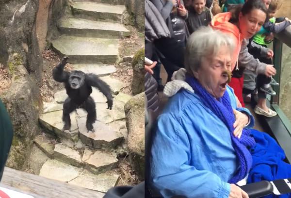 黑猩猩一激动竟然丢大便,老奶奶一脸惊慌