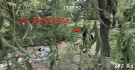▲▼女主播收拾公园垃圾装环保 假掰!被监视器打到脸肿。(图/翻摄微博)