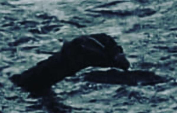 ▲▼尼斯湖水怪現身。(圖/翻攝自尼斯湖水怪觀光登記處網站)