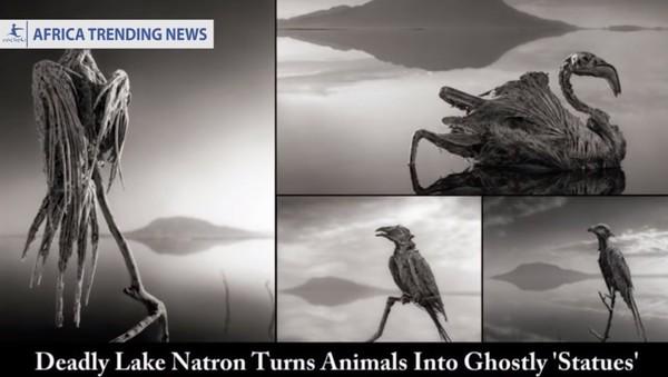 """▲""""納特龍湖""""(Lake Natron),碰到湖水的生物會變干尸。"""