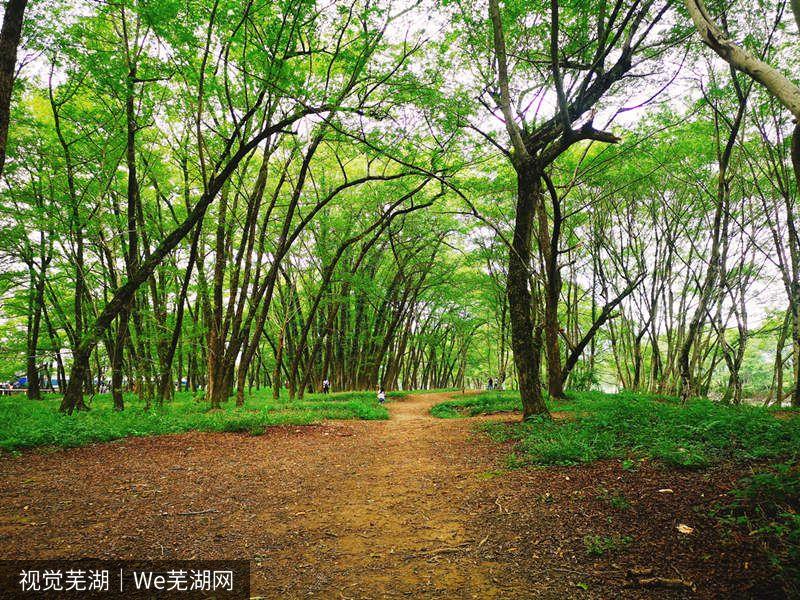 黄山角落的西溪南古村落,现实中的绿野仙踪